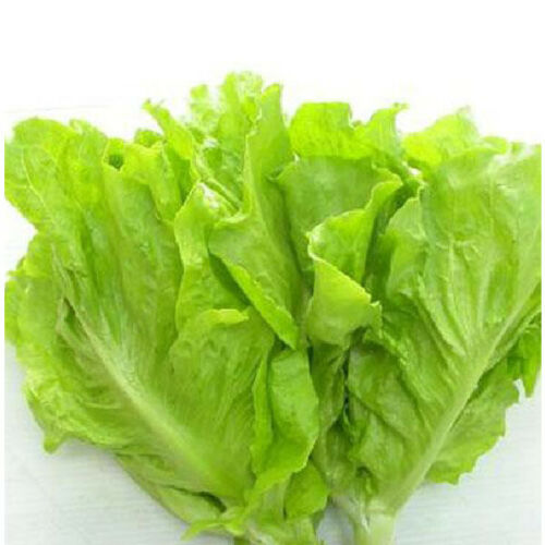 Salad Loose-Leaf Lettuce Seeds Organic Vegetable Seed FREE SHIPPING DOMESTIC USA
