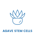 agave stem cell skincare serums