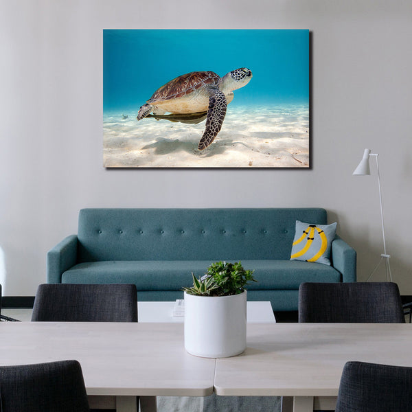 Sea Turtle - Unframed Canvas Print (BXY307)