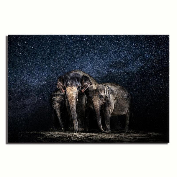 Asst Animals Elephant/Tiger/Lion/Horse/Macaw - Unframed Canvas Print (BXY293c)