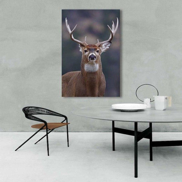 Asst Animal Portraits - Rolled Canvas Print Only (BXY234c)