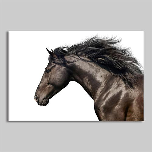 Asst Animal Portraits - Unframed Canvas Print (BXY234c)