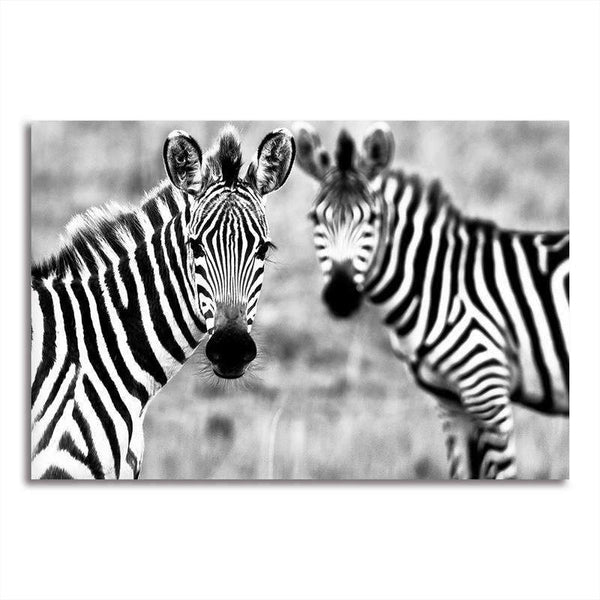 Asst African Animals Cow/Zebra/Rhinoceros - Unframed Canvas Print (BXY228b)