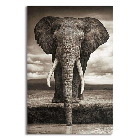 Asst Stunning Elephant Portrait - Rolled Canvas Print Only (BXY219c)