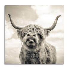 Asst Highland Cow/ Yak - Rolled Canvas Print Only (BXY305b)