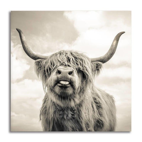 Asst Highland Cow/ Yak - Unframed Canvas Print (BXY305b)