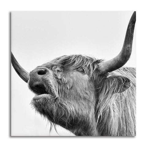 Asst Highland Cow/ Yak - Unframed Canvas Print (BXY305)