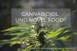 Mr. NiceVape News #2 Cannabidiol und die Novel Food Verordnung