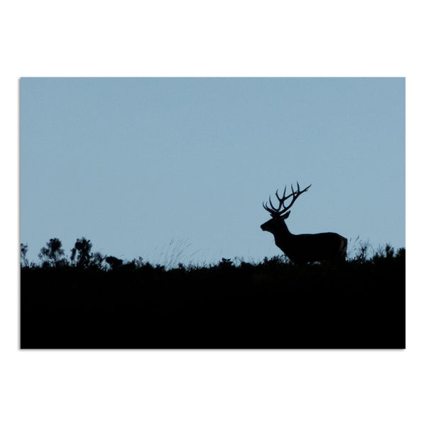 Deer at dawn photography art print | Indagatio