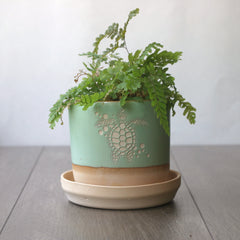 "4"" pistachio green turtle planter with a fern in it"