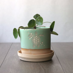 "4"" pistachio green sea turtle plant pot"