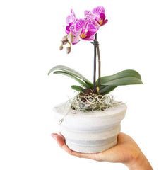 Concrete Rotunda Planter displaying an orchid by Room 2046 Concept Shop in Toronto
