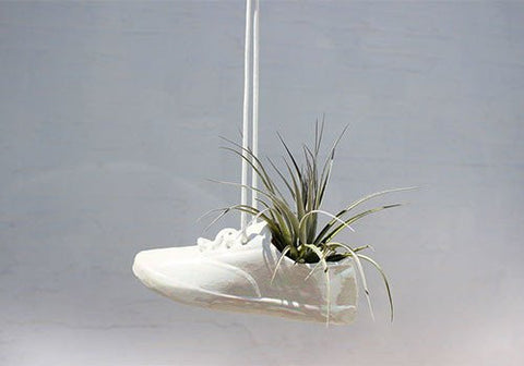 Air plant shoe planter available from Room 2046 Toronto Canada