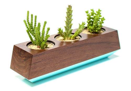 Boxcar Triple Planter Walnut Robin Egg Blue | Room 2046 Toronto Canada