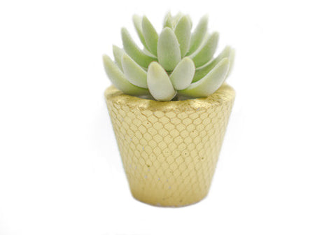 Room 2046 Pico Concrete Planter - Textured Gold Metallic | Room 2046 Toronto Canada