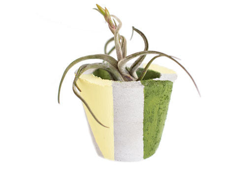 Room 2046 Pico Concrete Planter - Green | Room 2046 Toronto Canada
