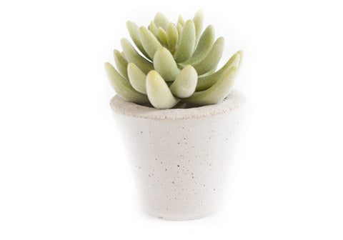 Room 2046 Pico Concrete Planter - Unpainted | Room 2046 Toronto Canada