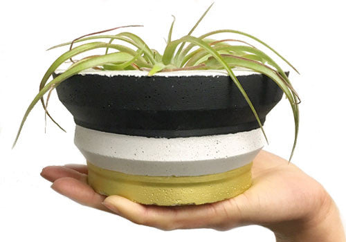 Room 2046 Rotunda Concrete Planter - Gold & Black | Room 2046 Toronto Canada