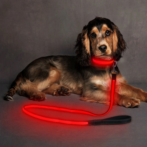 Safety Doggie Leash/Night time walks/lost dog find dog/anti-car accident/Red/Green - Safetydoggiecollars
