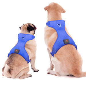 Safety Dog Harness For Outdoor Safety, Blue