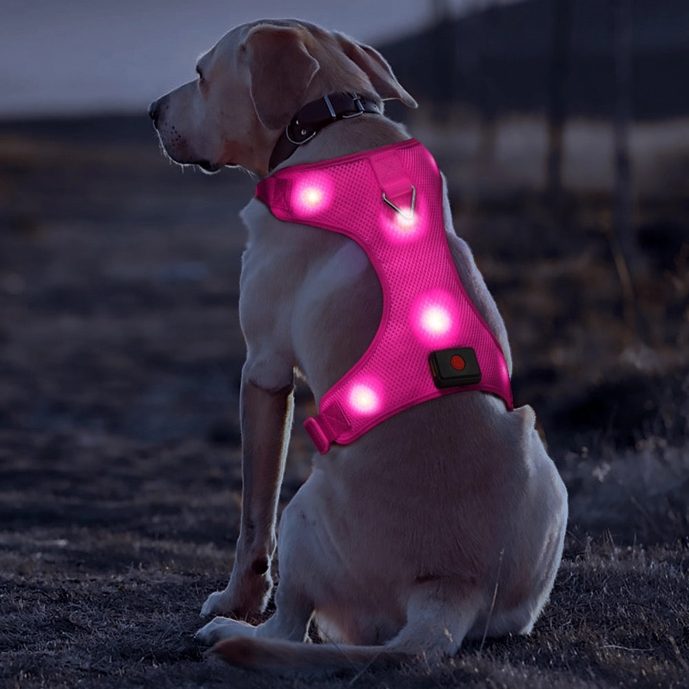 Safety doggie harness/night time walks/lost dog find dog/hiking/anti-accident/all colors - Safetydoggiecollars