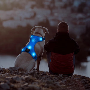 Safety doggie harness/Outdoor safety/Mesh/Rechargeable/Led/BLUE - Safetydoggiecollars