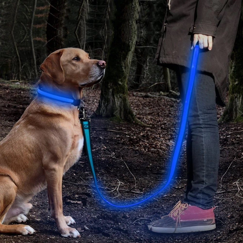 Safety doggie collar for night time walks/lost pet/anti accident/Led/Blue - Safetydoggiecollars