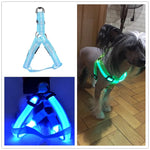 Safety doggie harness 1/Blue