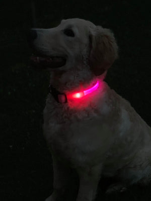 Safety Dog Collar For Outdoor Safety, Pink
