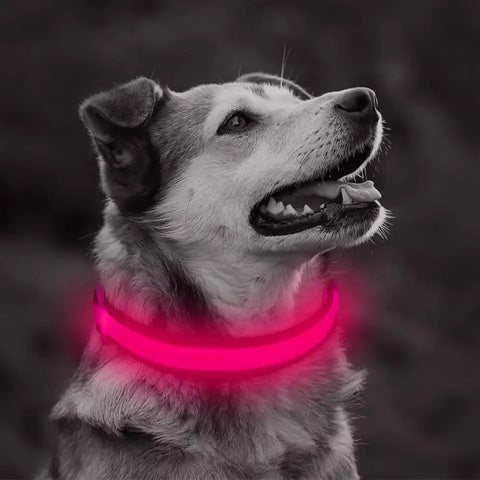 Top Quality Safety doggie collars/All Colors