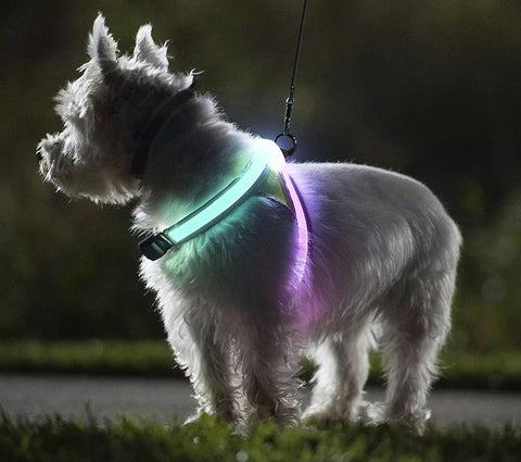 Top Quality 2020 Reflective Led Dog Harness Led Dog Collar