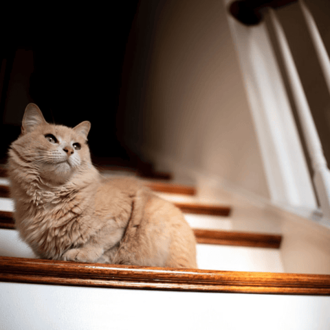 cat on a staircase