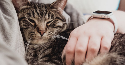 Cat and human getting some rest in bed to stay on their sleep schedule when the days get shorter in the fall.