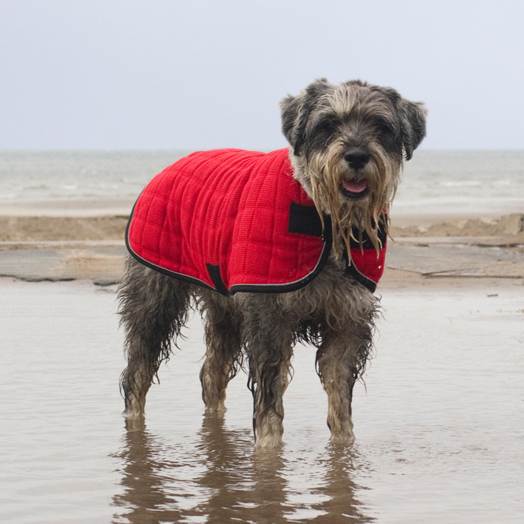 Therma-Dry Winter Dog Coat with Standard Neck
