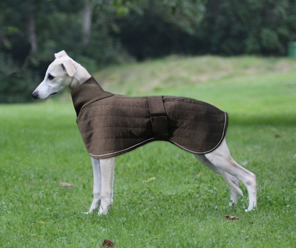 Therma-Dry Whippet Dog Coat
