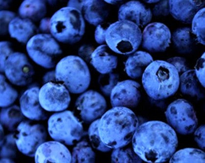 Blueberry Fragrance Oil - Concentrate