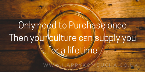 Only need to purchase once, then your culture can supply you for a lifetime