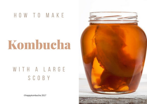 Large scoby instructions