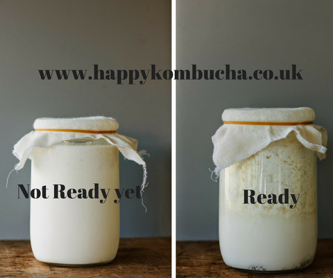 ready-not ready kefir