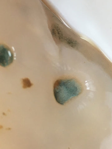 Mold in a kombucha scoby