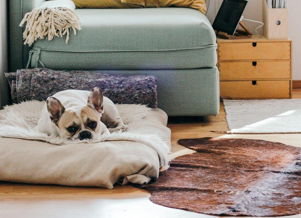 5 reasons your dog needs its own bed | CreatureLand