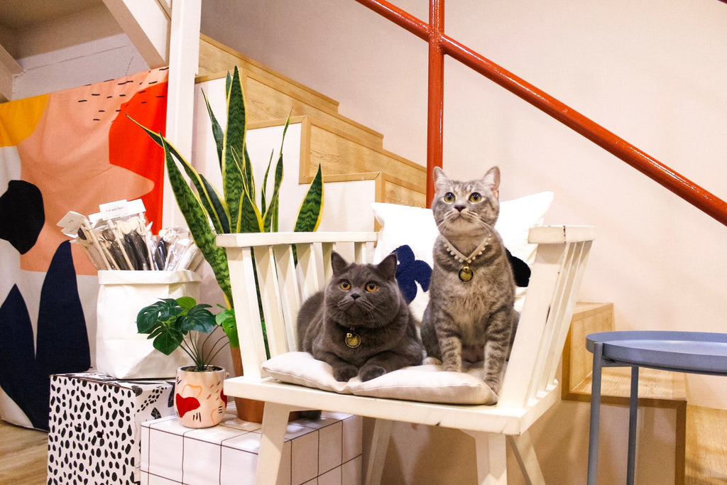 Creatureland   About Us   Cats