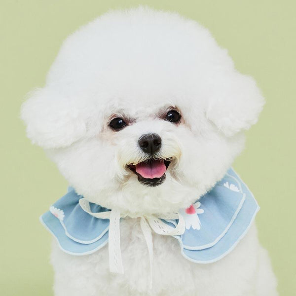 4Dogs Daisy Cape ( 2 Colours ) - CreatureLand