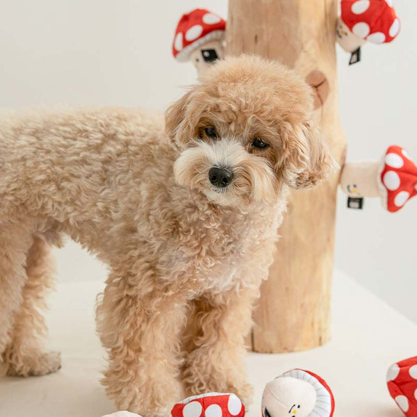 Bite Me Mushroom Nose Work Dog Toy - CreatureLand