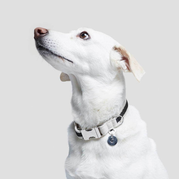 Cloud7 Dog Collar Hugo - Black - CreatureLand