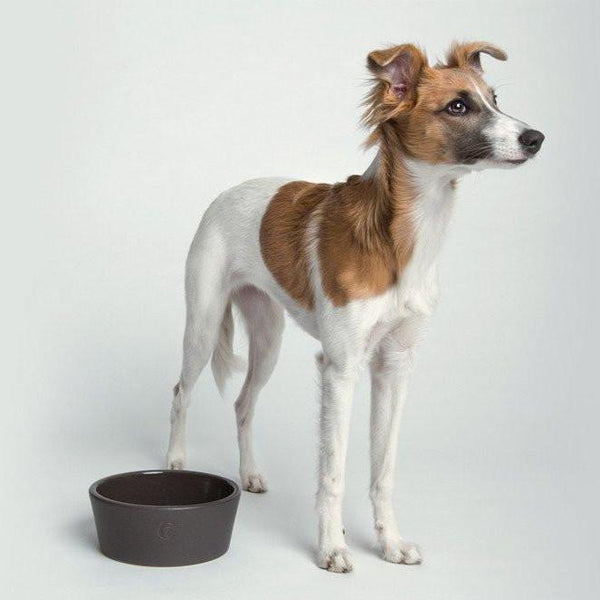 Cloud7 Oliver Dog Bowl - Warm Grey - CreatureLand