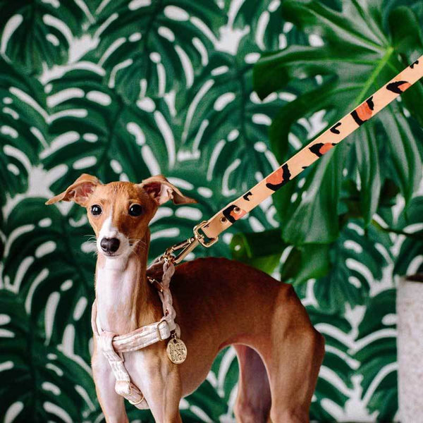 Nice Digs TWO TONE DOG LEASH - TAN ANIMAL - CreatureLand