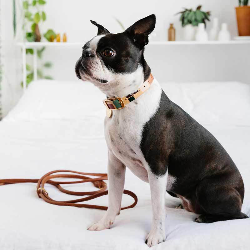 Nice Digs TWO TONE LEATHER DOG COLLAR -SHAPES - CreatureLand