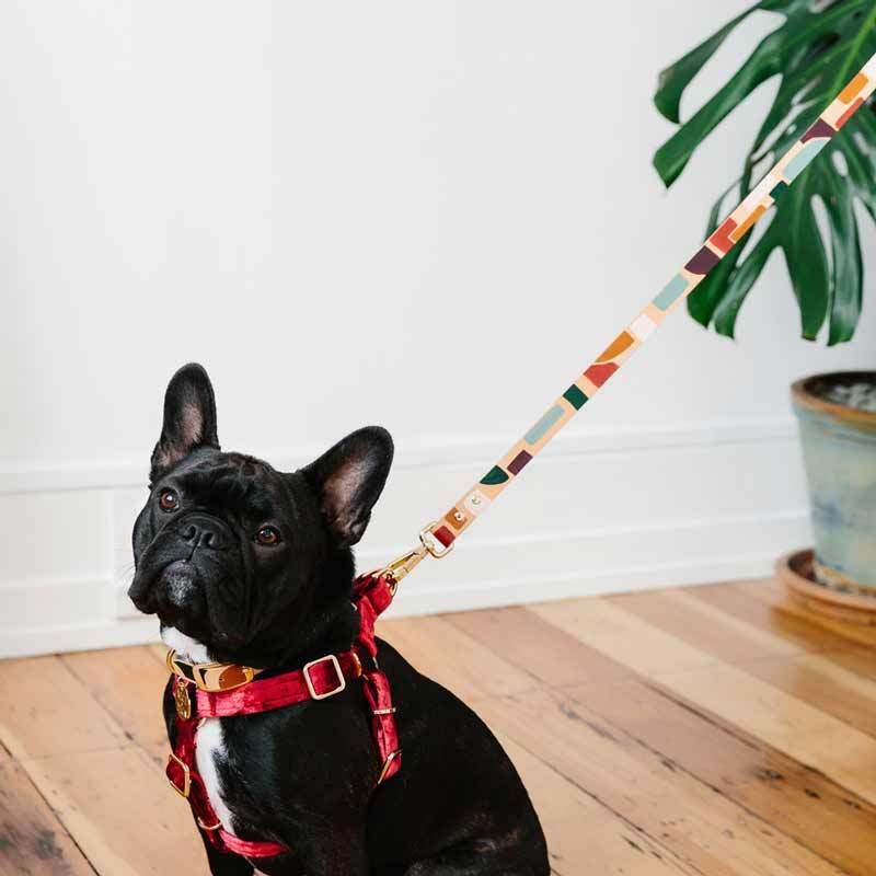 Nice Digs TWO TONE LEATHER DOG LEASH - SHAPES - CreatureLand