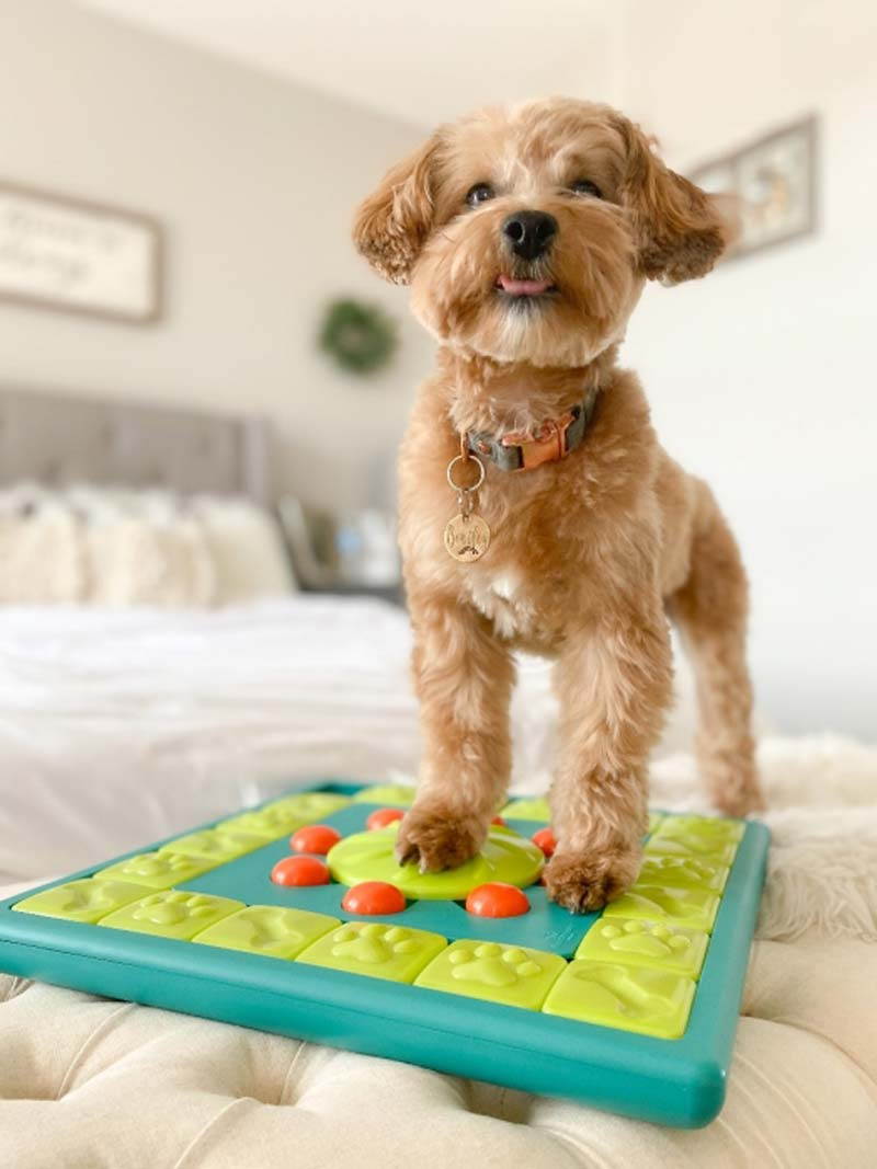 Nina Ottosson MultiPuzzle Dog Strategy Game - CreatureLand